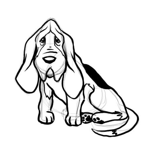 500x500 How To Draw A Basset Hound 8 Steps (With Pictures)