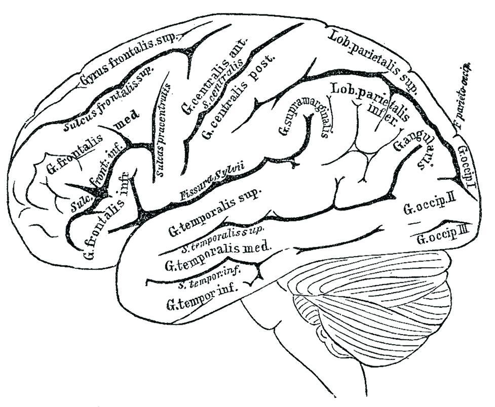 977x804 Brain Coloring Book Also Brain Coloring Book Plus Pin Drawn Brain