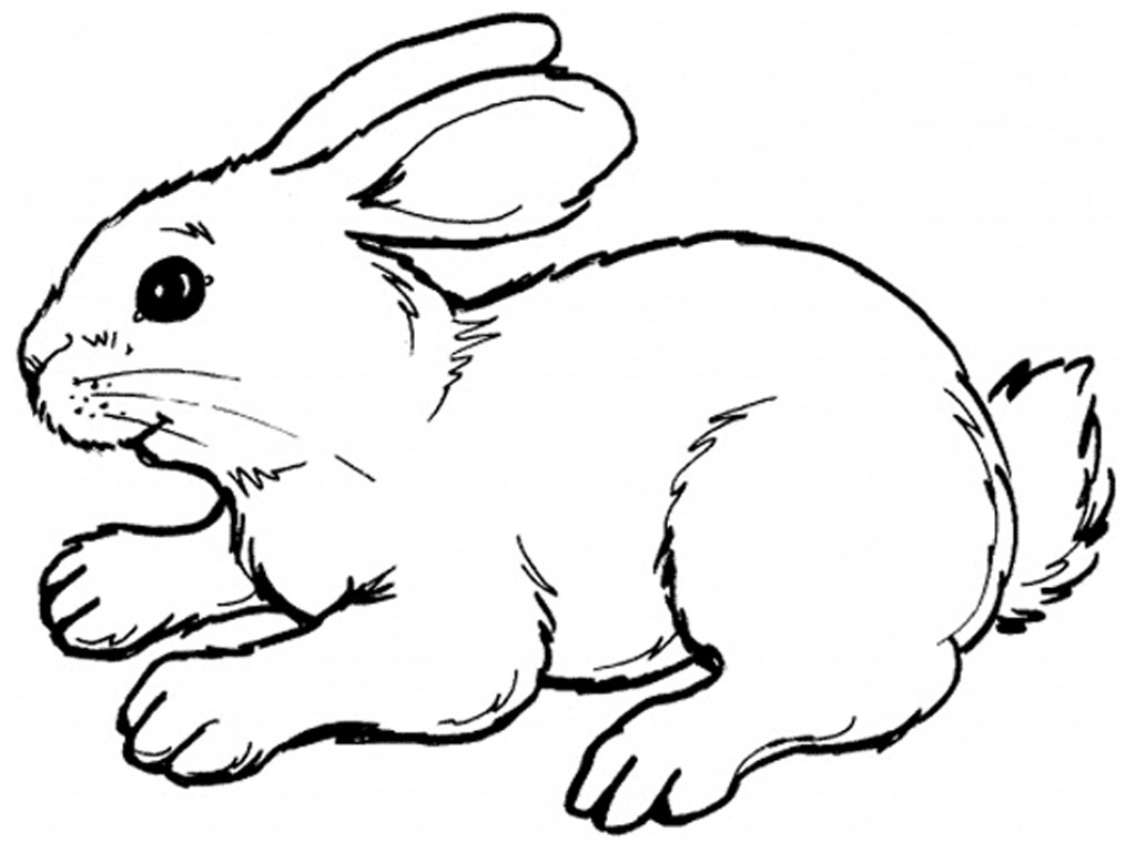 1024x768 bunny clipart line drawing - Bunny Coloring 2