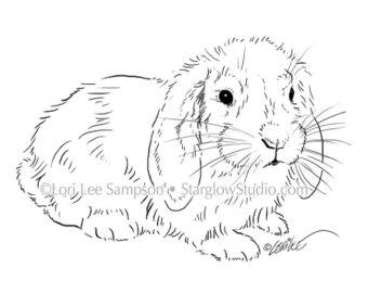 340x270 4 Bunny Rabbit Drawings Clip Art Sketches Digital Stamp