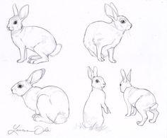 236x195 Rabbit Drawing