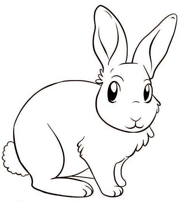 600x713 Amazing Bunny Drawing Bunnies Bunny And Drawings