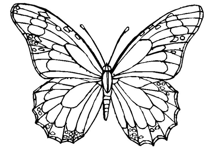 Line Drawing Butterflies At Getdrawings Com Free For Personal Use