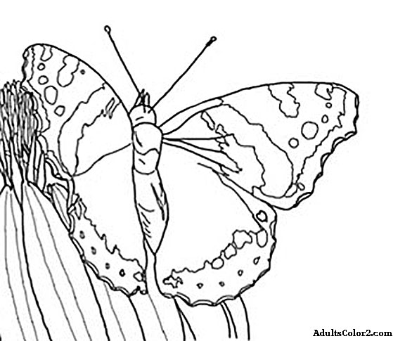 576x485 Butterfly Coloring Pages Airborne Art