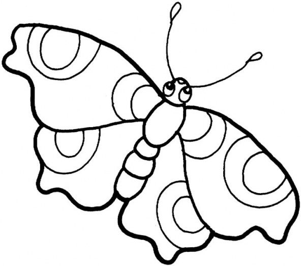 592x525 Butterfly Drawing