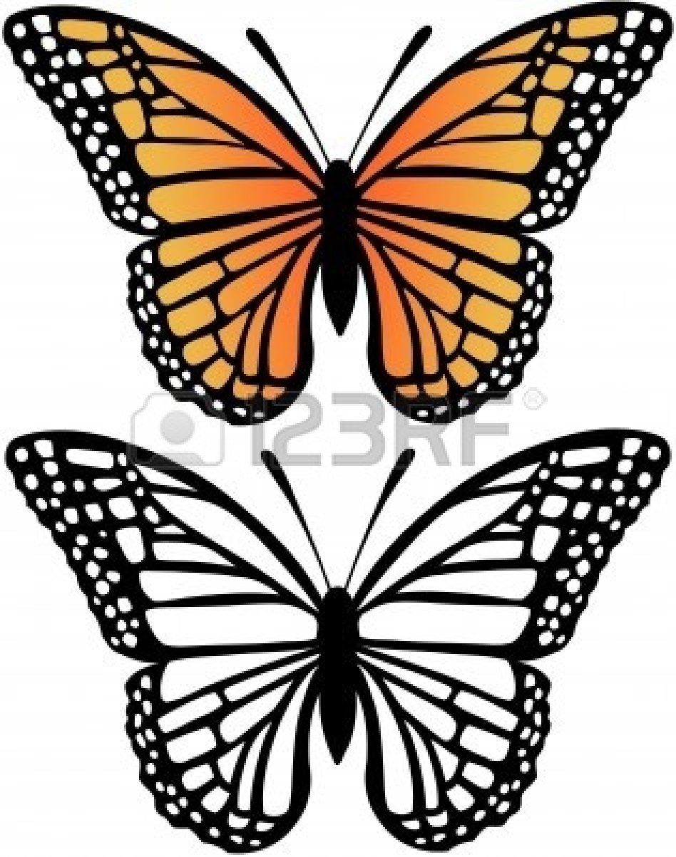 948x1203 Drawn Butterfly Line Art