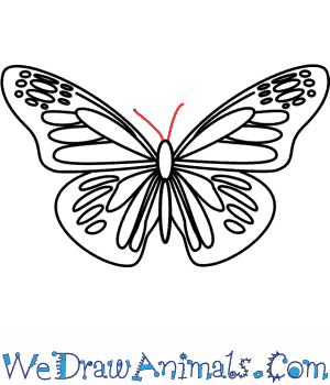 300x350 How To Draw A Butterfly