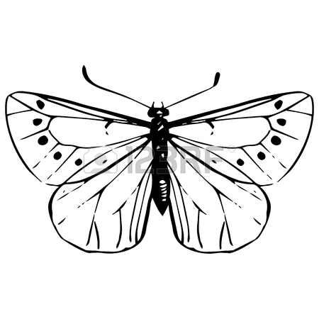 450x450 Machaon, Hand Drawn Butterfly, Line Drawing Vector Element Royalty