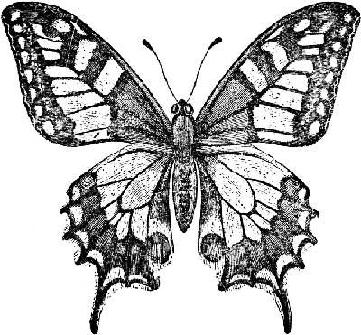 400x371 Embroidery Pattern For Monarch Butterfly