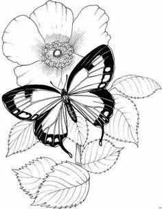 236x304 Linert Drawings Butterflies Blackmp White Line Drawing