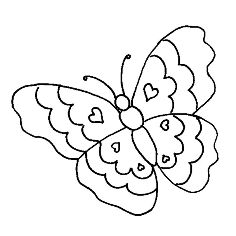 800x800 Butterflies