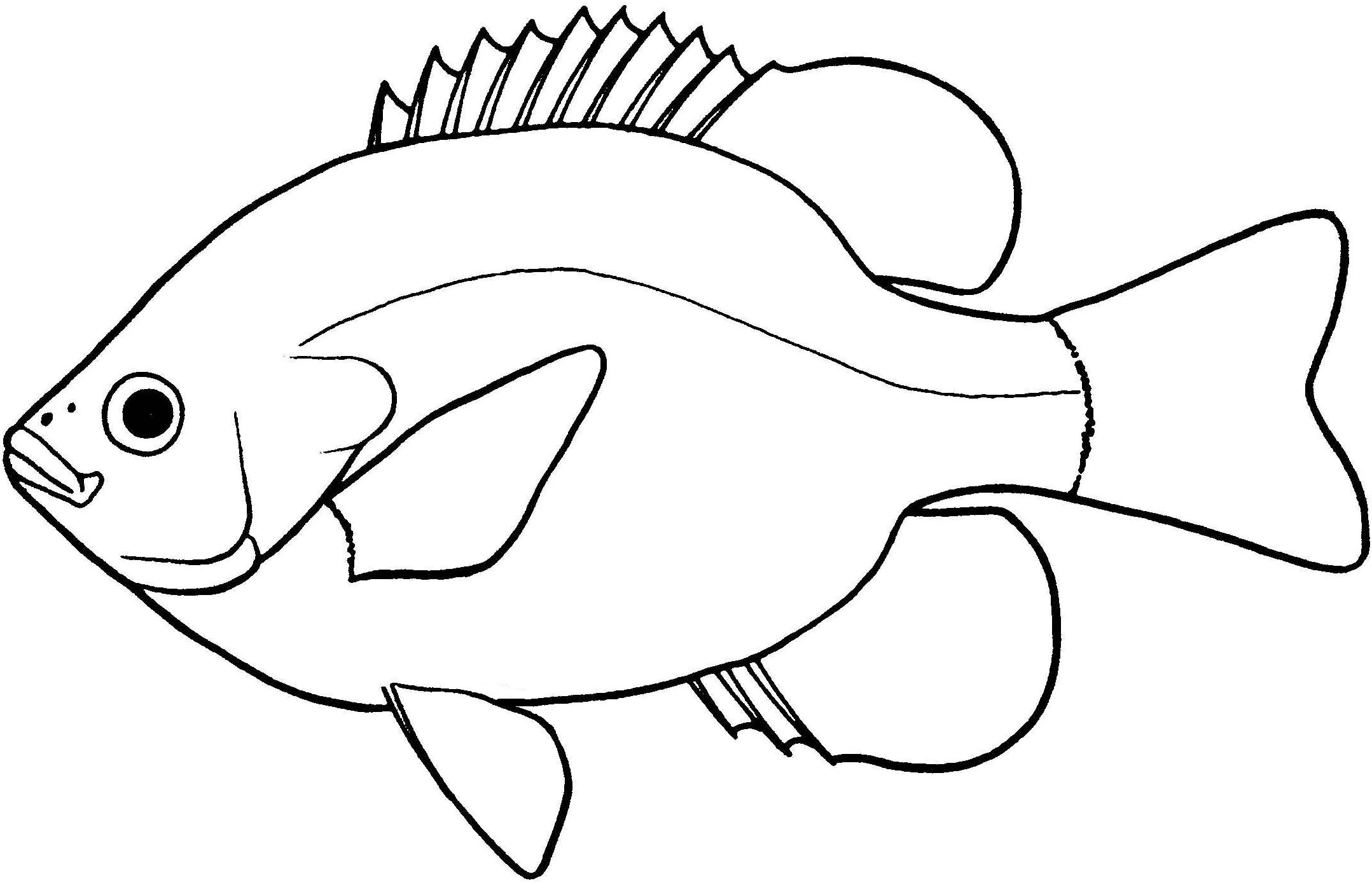2157x1389 Fish Line Drawing Group