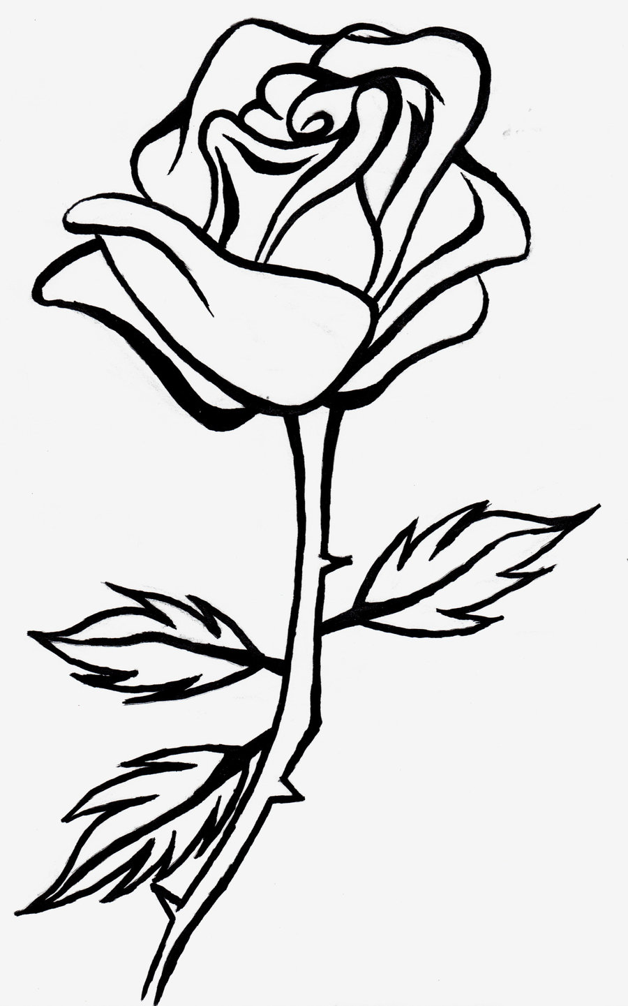 900x1441 Rose Line Drawing Clipart