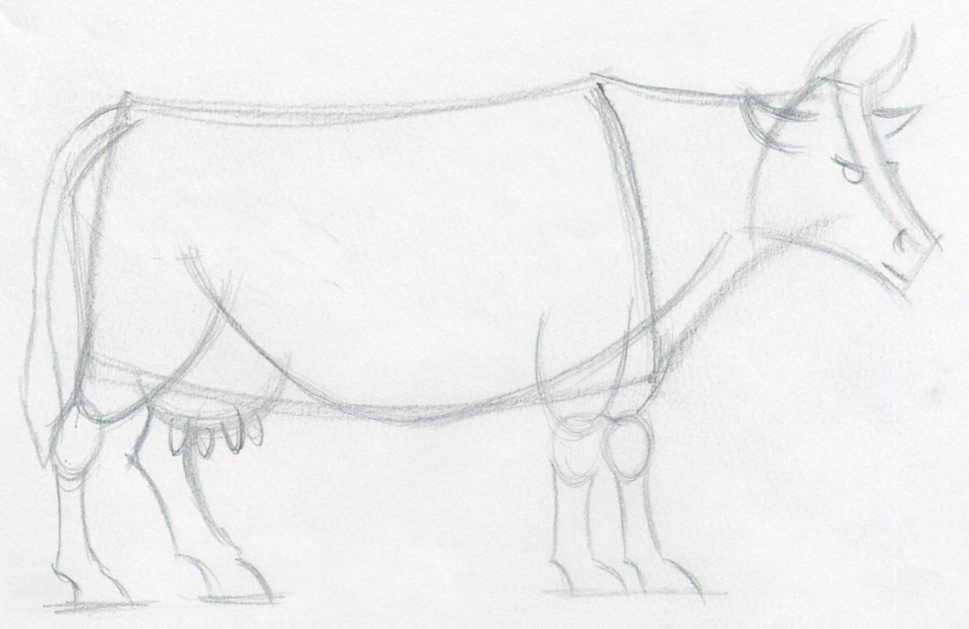 969x629 How To Draw A Cow Step By Step