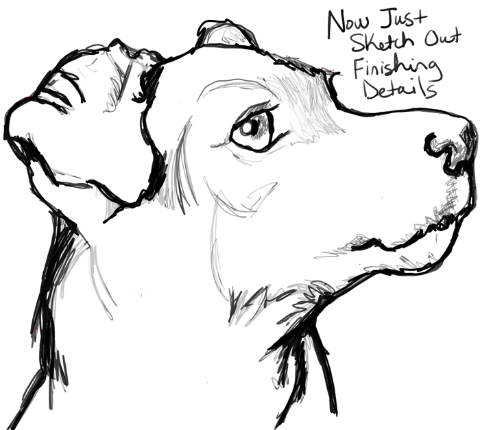 700x627 learn how to draw a realistic terrier39s face with the following