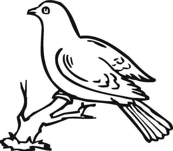 588x515 Drawing Dove Cliparts