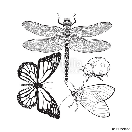 500x500 Set Of Insects Like Dragonfly, Butterfly, Ladybird And Moth