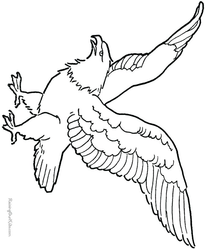 670x820 Philadelphia Eagles Coloring Pages Pin Bald Eagle Line Drawing 3