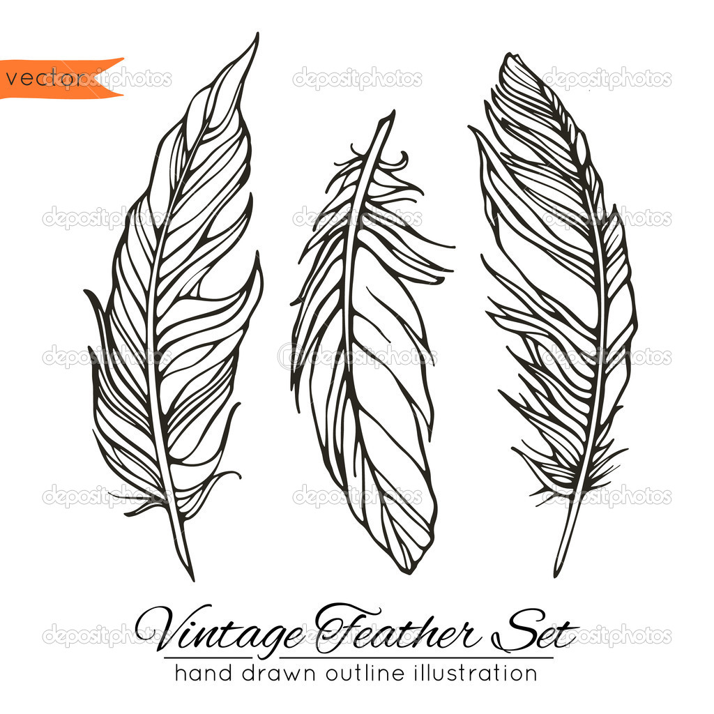1024x1024 Feather Line Drawing Vintage Feather Set Isolated On White Stock