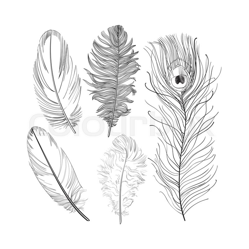 800x800 Hand Drawn Set Of Various Black And White Bird Feathers, Sketch