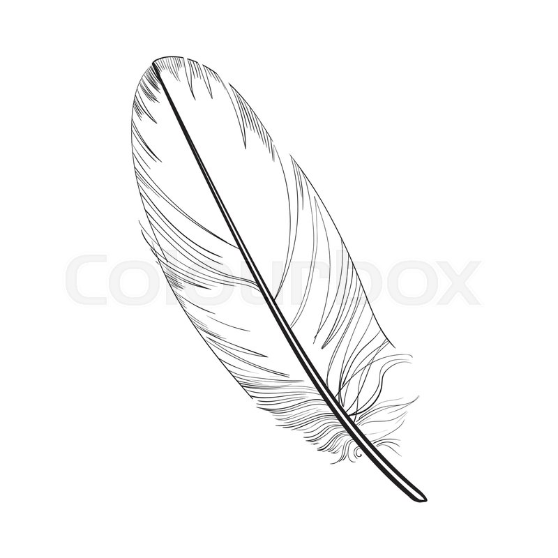 800x800 Hand Drawn Smoth, Black And White Tropical, Exotic Bird Feather