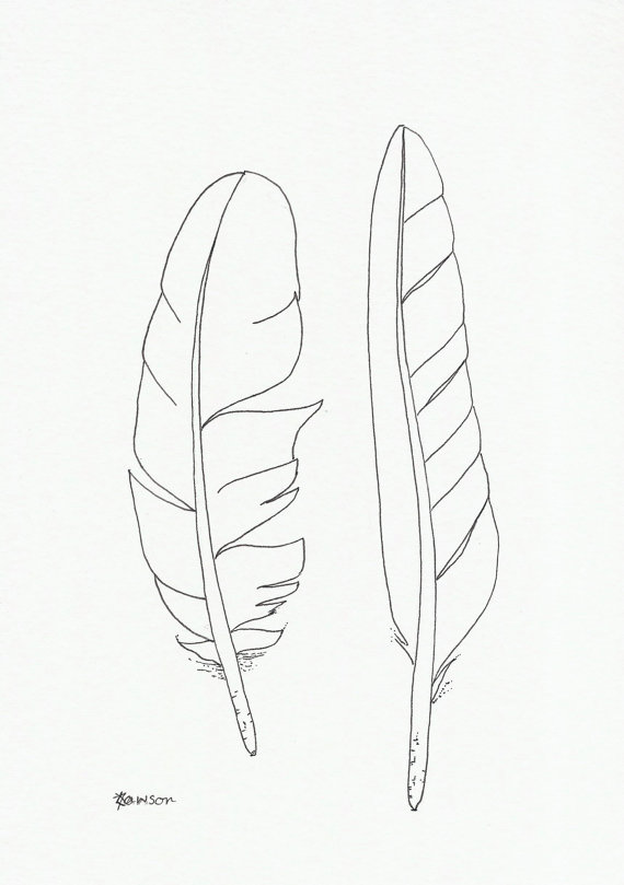 570x809 Original Ink Feather Drawing 2 Sea Bird Feathers