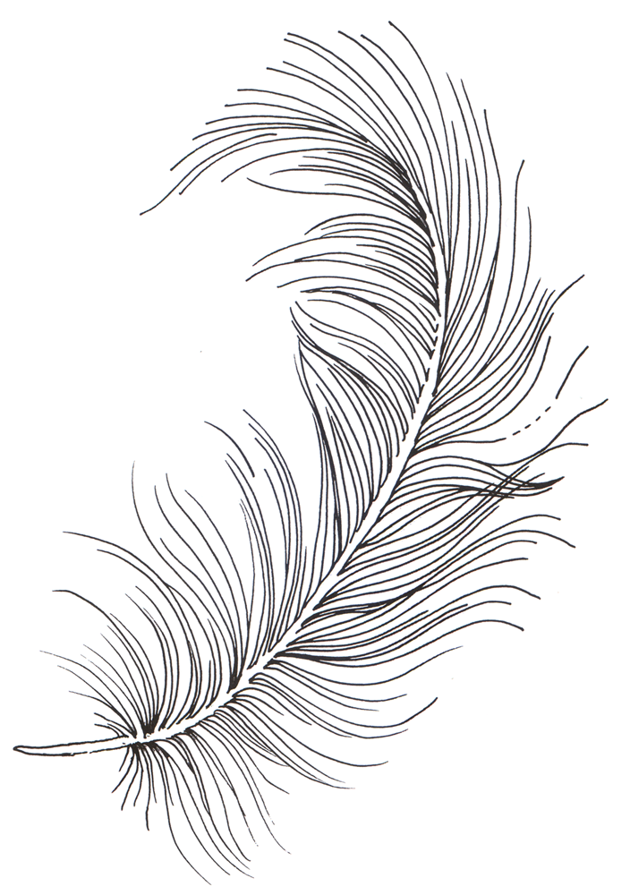 Line Art Feather : Line drawing feather at getdrawings free for
