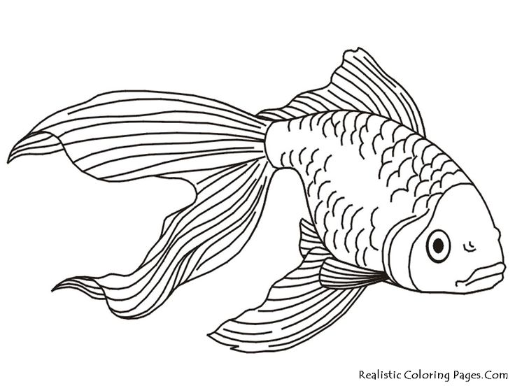 736x552 Fish Drawings Images Best 25 Fish Drawings Ideas On Fish