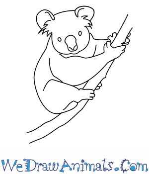 300x350 How To Draw A Koala