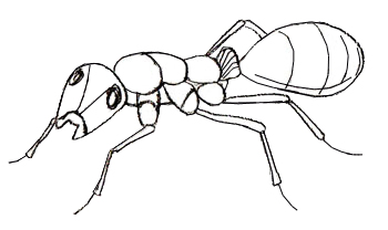 350x208 How To Draw An Ant