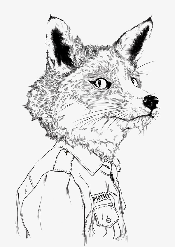 Line Drawing Fox