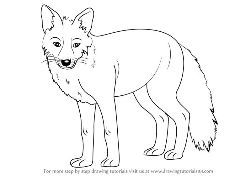 800x561 Learn How To Draw A Fox (Zoo Animals) Step By Step Drawing Tutorials