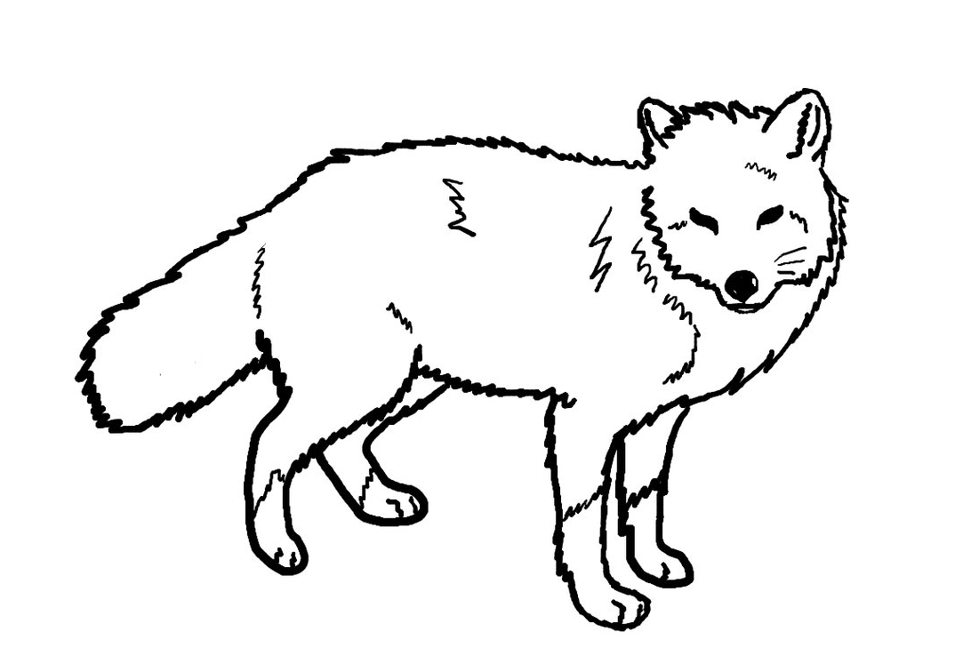1083x738 Line Drawings Of Animals Red Fox Line Art By Ohbiteme000