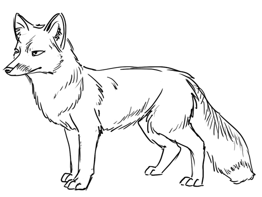 532x400 Decoration Of Drawing Room, Red Fox Line Drawing Fox Line Drawing