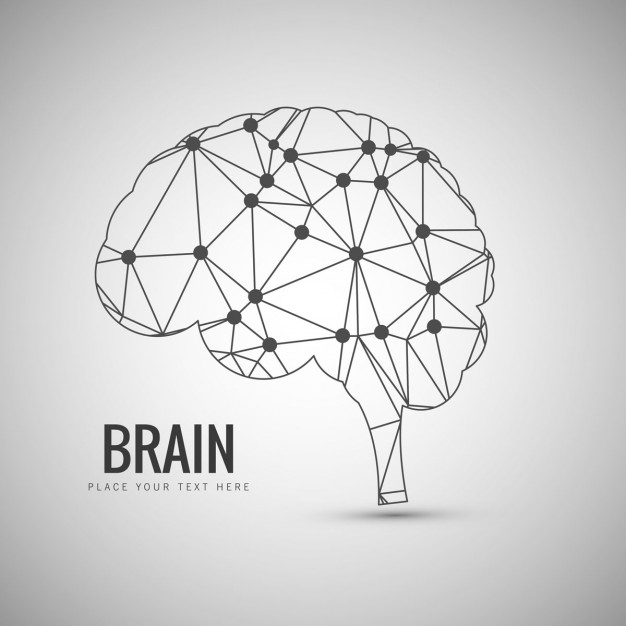 626x626 Brain Vectors, Photos And Psd Files Free Download