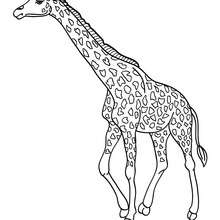220x220 Giraffe Coloring Pages, Kids Crafts And Activities, Drawing