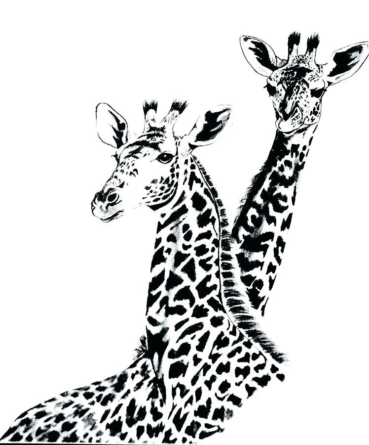 748x900 Giraffe Drawing Draw Giraffe Giraffe Drawing Steps Affan