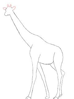 240x320 Giraffe Drawing Images Tags Giraffe Drawing Images Sketch