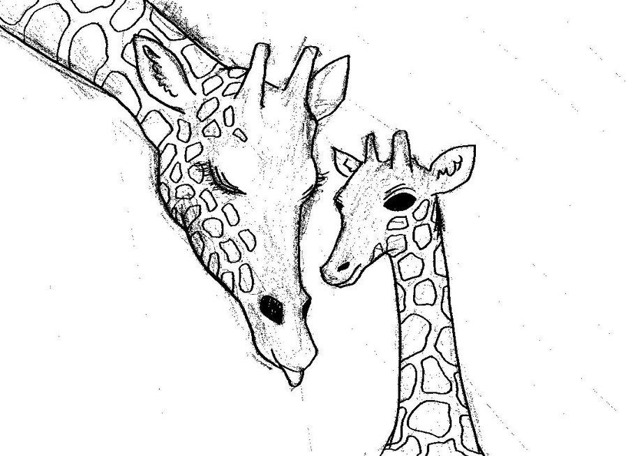 900x653 Giraffe Family Illustration By Ritsypls