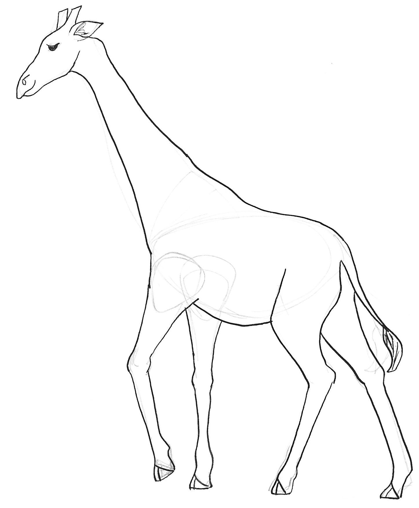 1446x1752 Giraffe Sketch Drawing