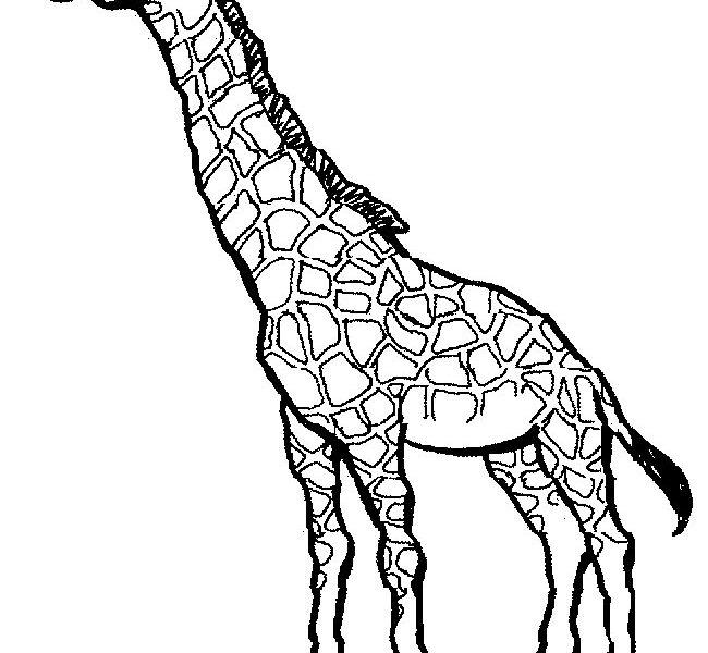 650x600 Good Giraffe Coloring Page 18 On Line Drawings With Giraffe
