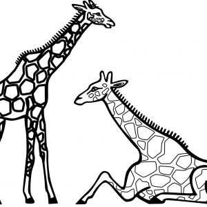 300x300 Giraffe