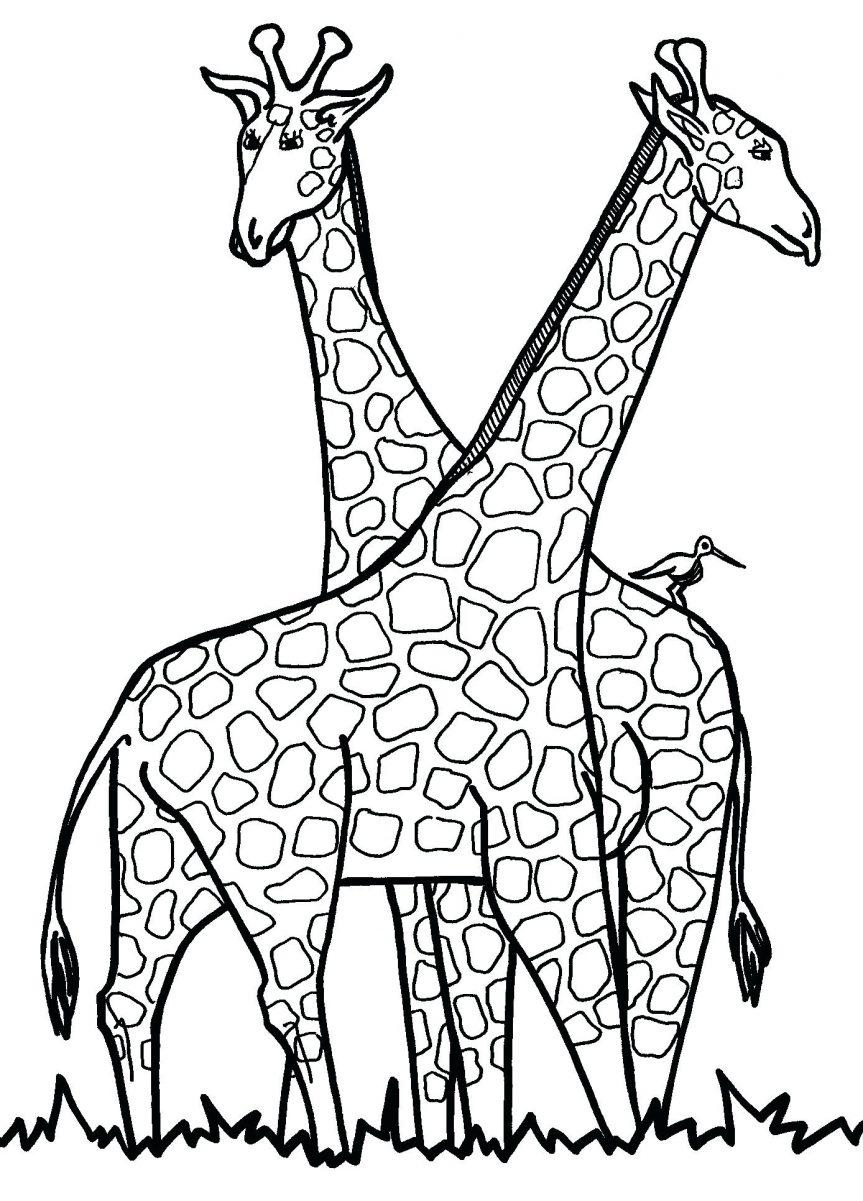 863x1201 Baby Giraffe Coloring Pages For Girls Animals Printable Craft Ears