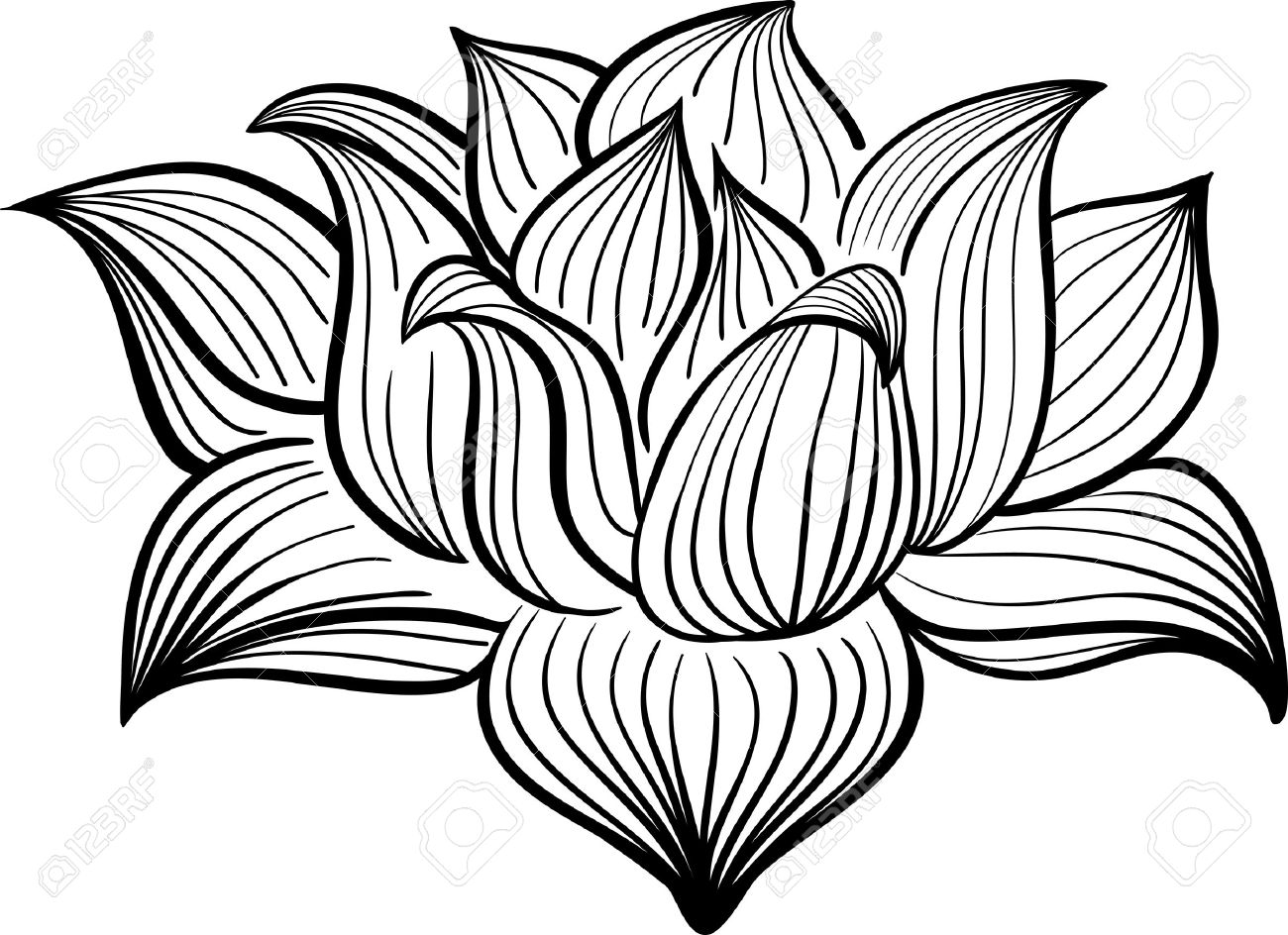 1300x944 Vector Black And White Lotus Flower Drawn In Sketch Style. Line