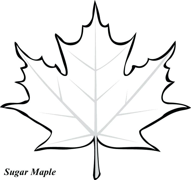 756x714 Fall Leaf Coloring Pages Leaf Printable Coloring Pages Big Fall