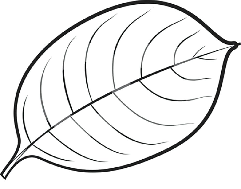 Line Drawing Leaf at GetDrawings.com | Free for personal use Line ...