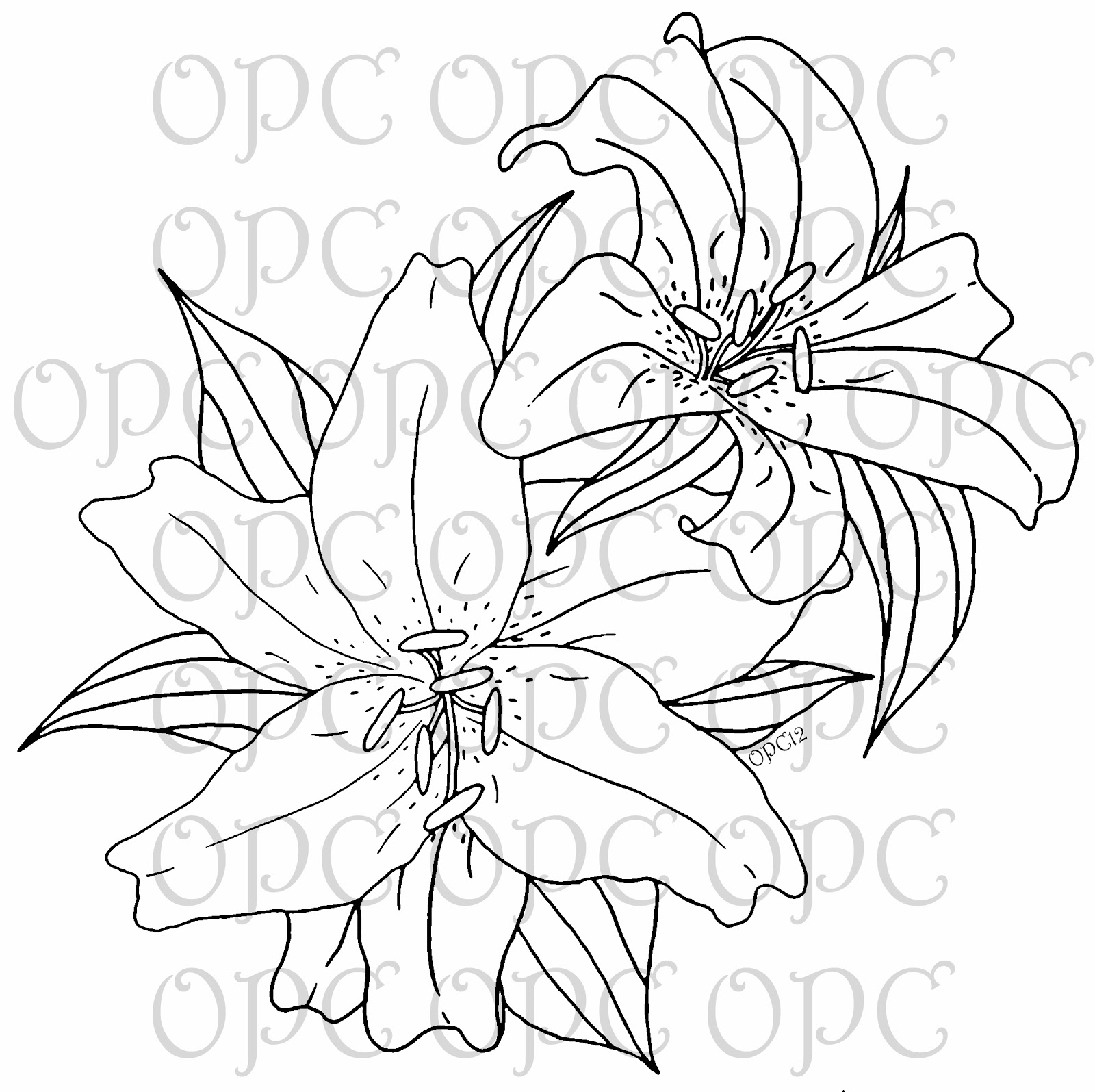 Line Drawing Lily