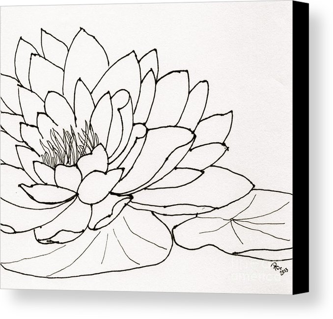 678x650 Water Lily Line Drawing Canvas Print Canvas Art By Anita Lewis