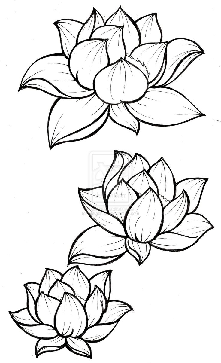Line Drawing Lotus Flower At Getdrawings Free For Personal Use