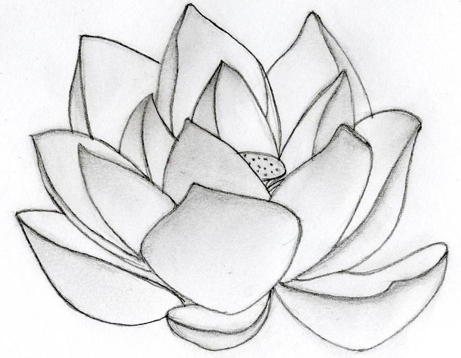 Line drawing lotus flower at getdrawings free for personal use 927x719 lotus flowers drawings mightylinksfo